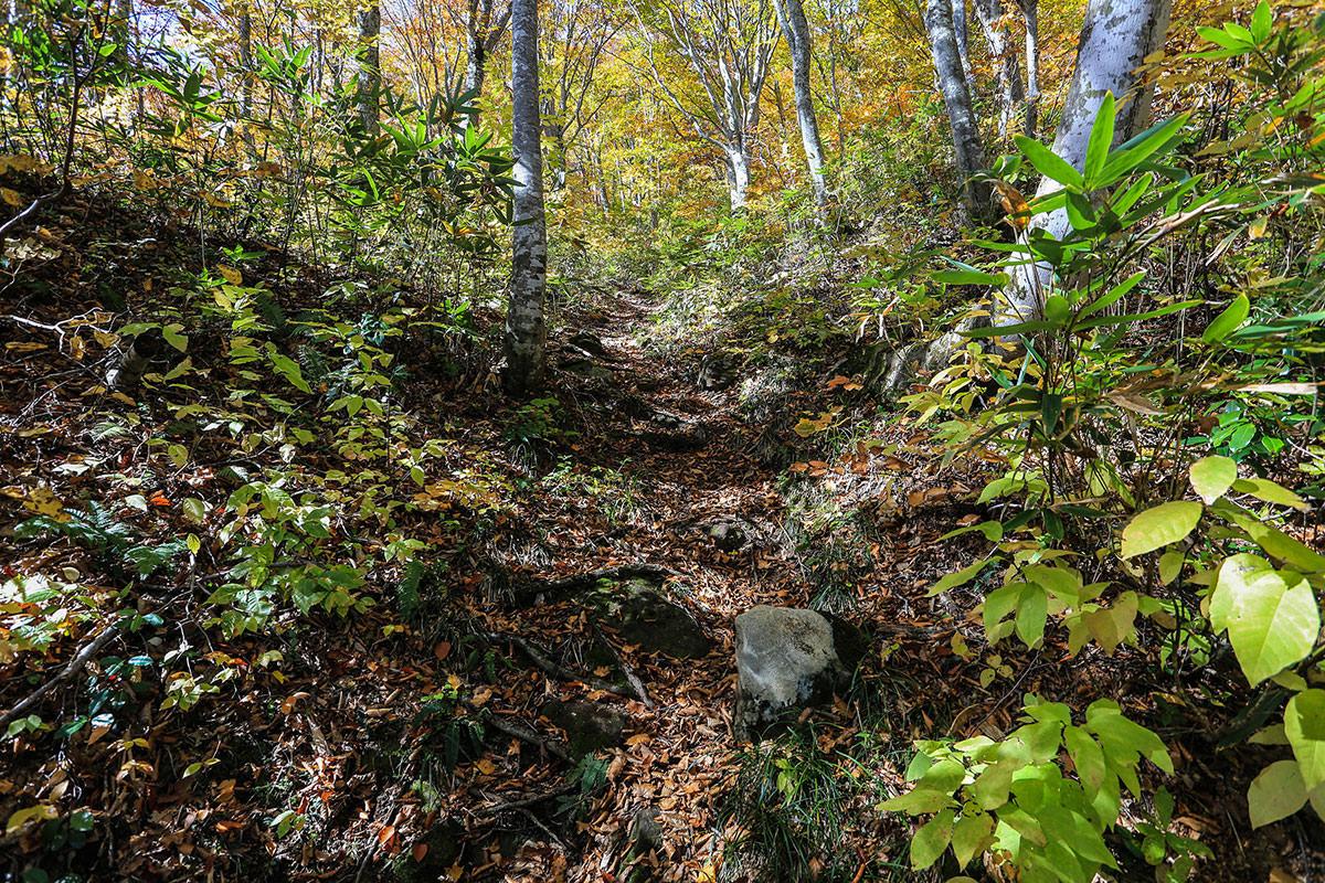 ブナ林の急斜面