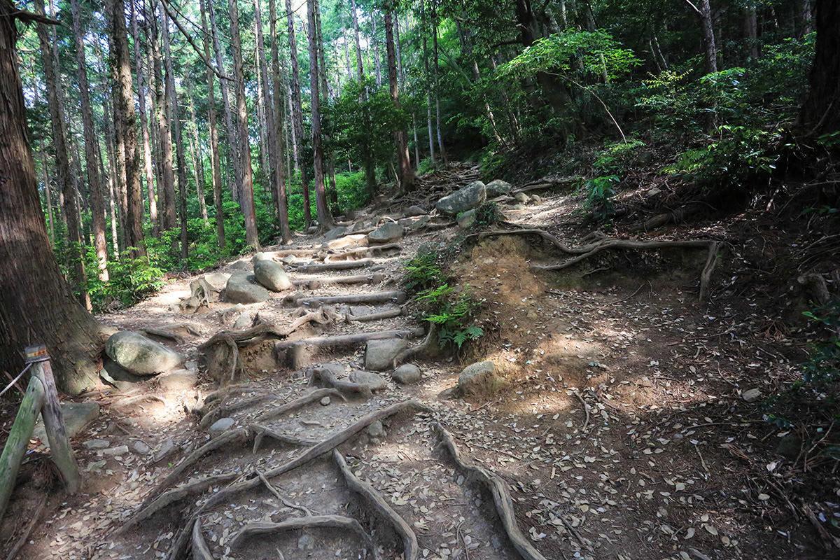 【筑波山】登山百景-緩やかに登っていく