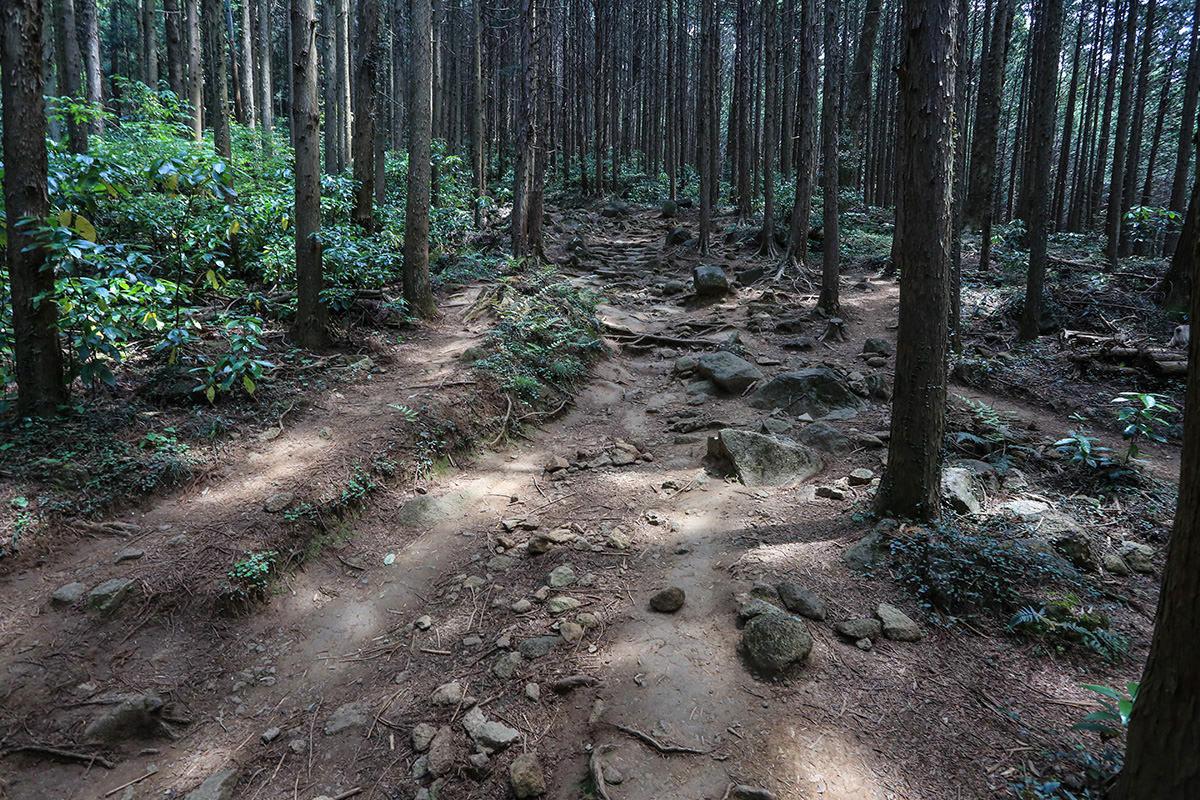 【筑波山 白雲橋コース】登山百景-木の中を登っていく
