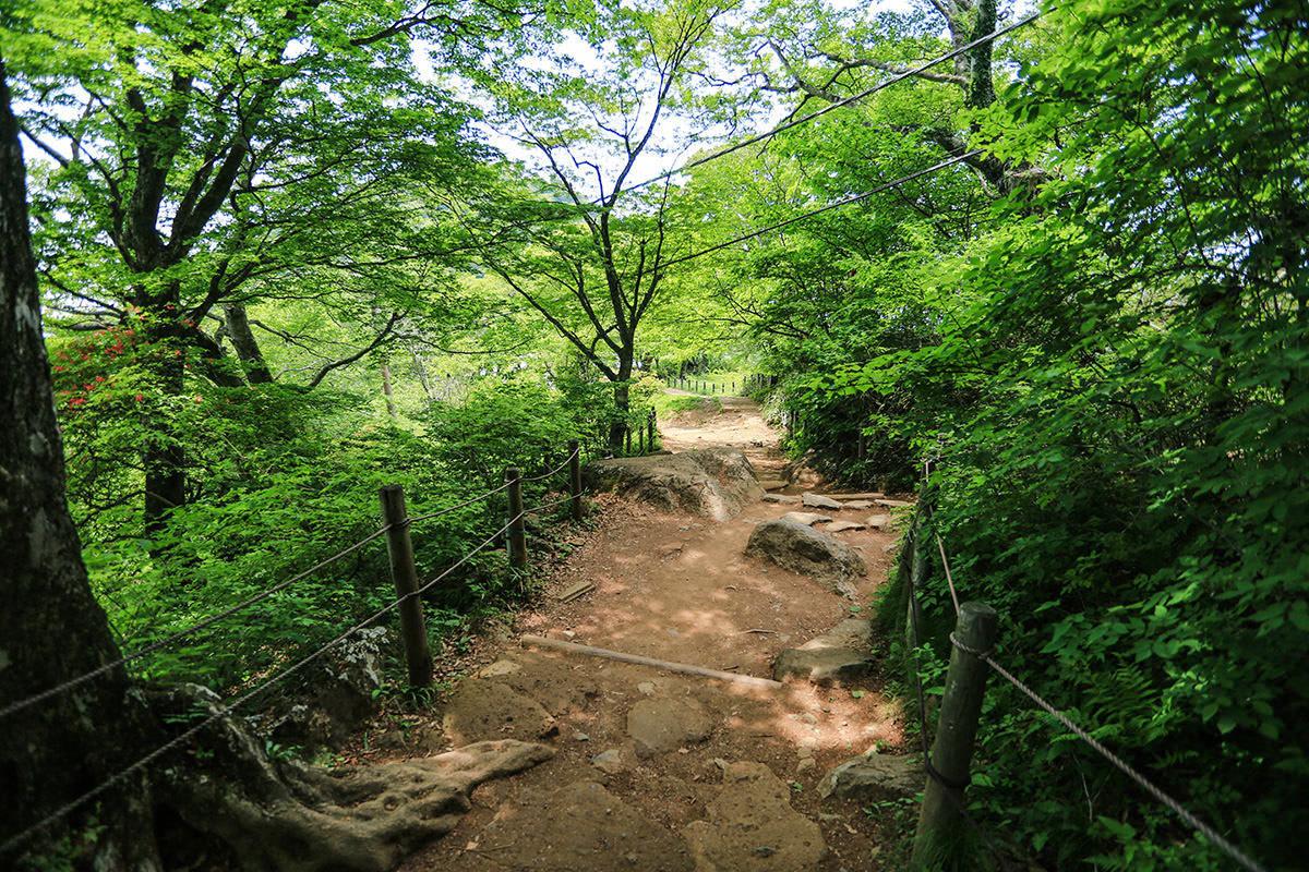 【筑波山 白雲橋コース】登山百景-歩きやすい