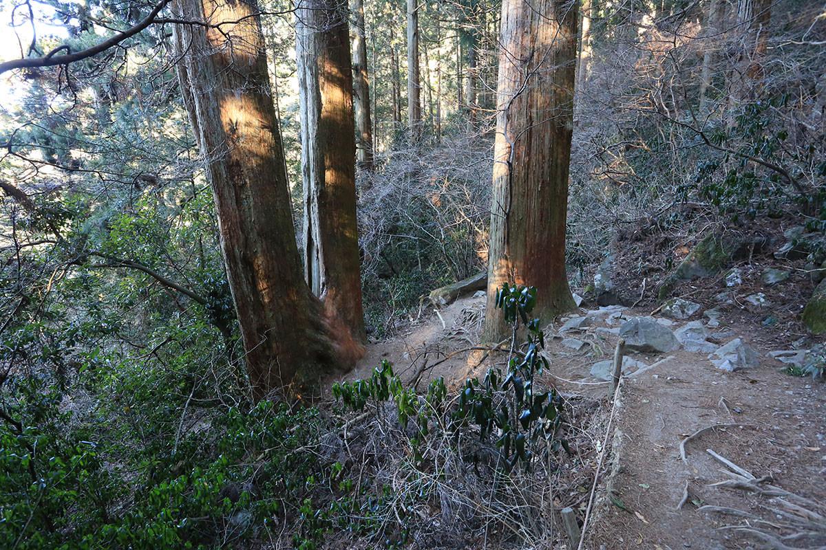 【筑波山】登山百景-夫婦杉