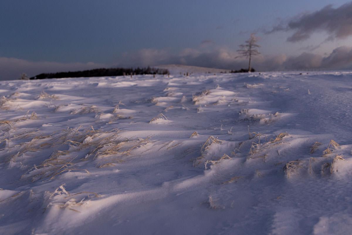 ひたすら枯れて凍った草