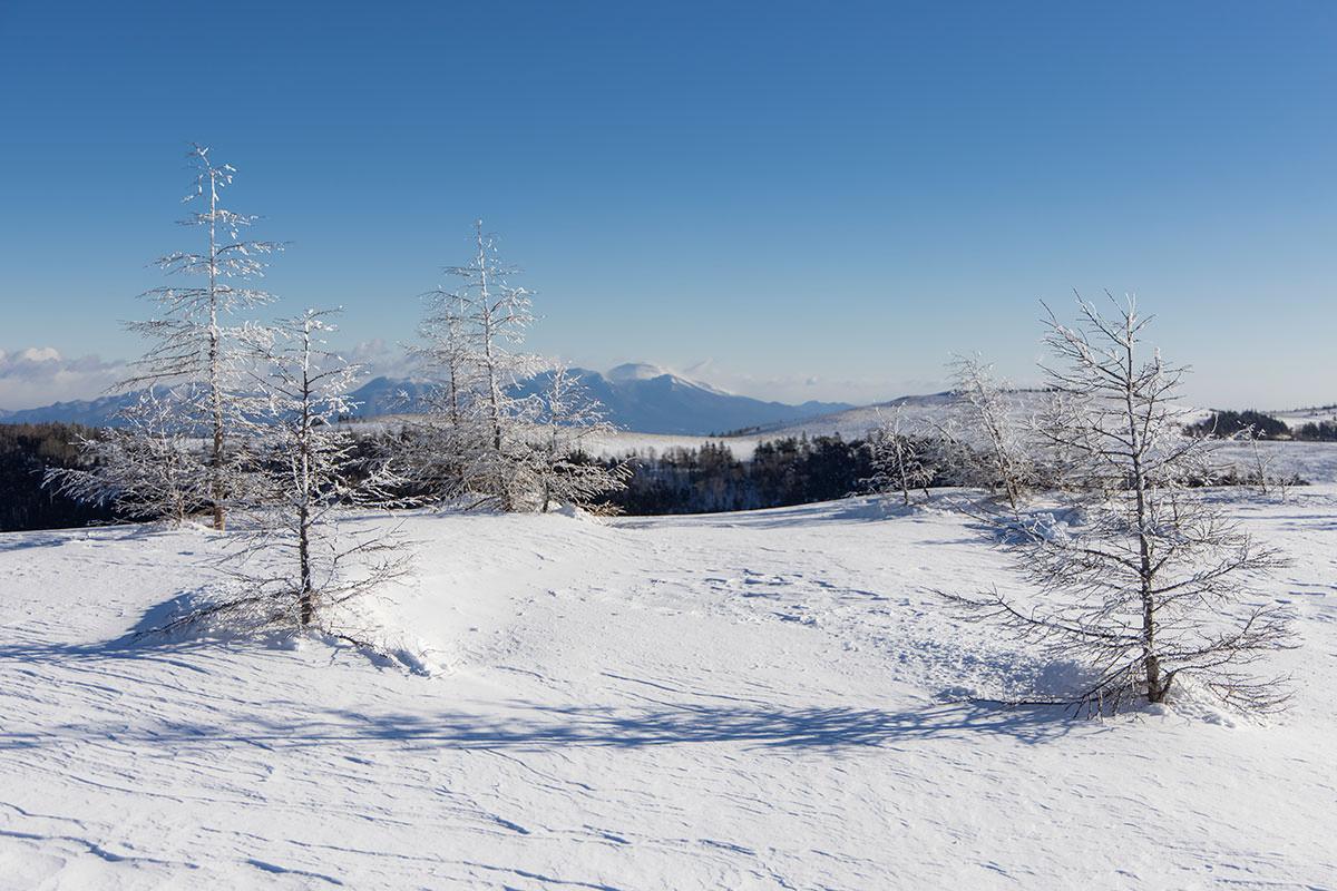 木の枝は凍り付いている