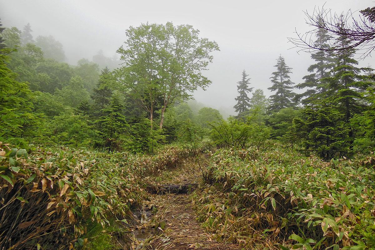 ひたすら緑と虫の登山道