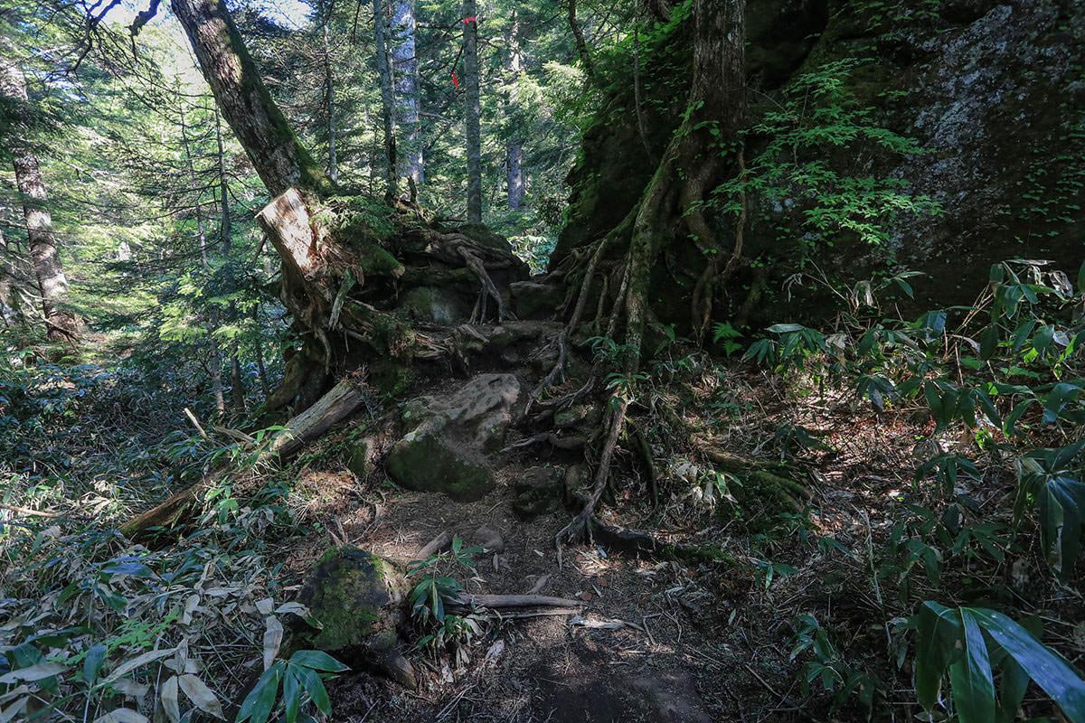 【焼岳 中ノ湯登山口】登山百景-木を跨ぐ