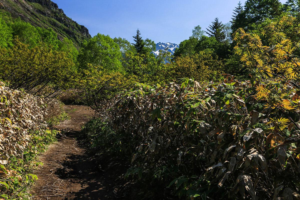 【焼岳 中ノ湯登山口】登山百景-穂高岳が見える