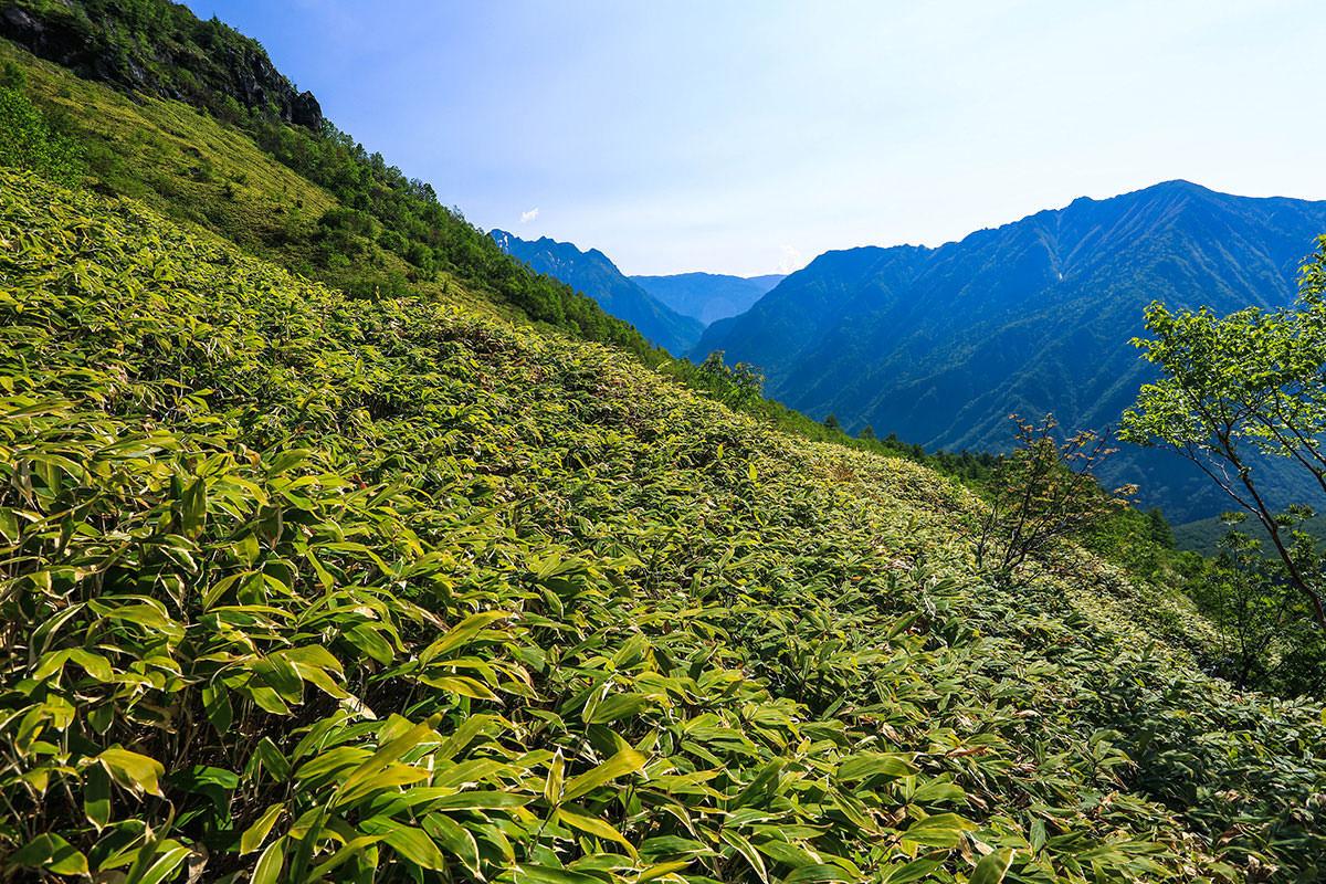 【焼岳 中ノ湯登山口】登山百景-段々上がってきた