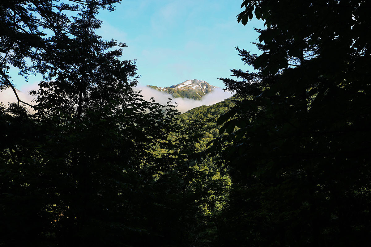 槍ヶ岳-木の間から笠ヶ岳