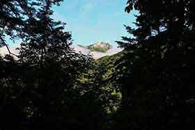 木の間から笠ヶ岳