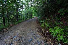 林道が続く