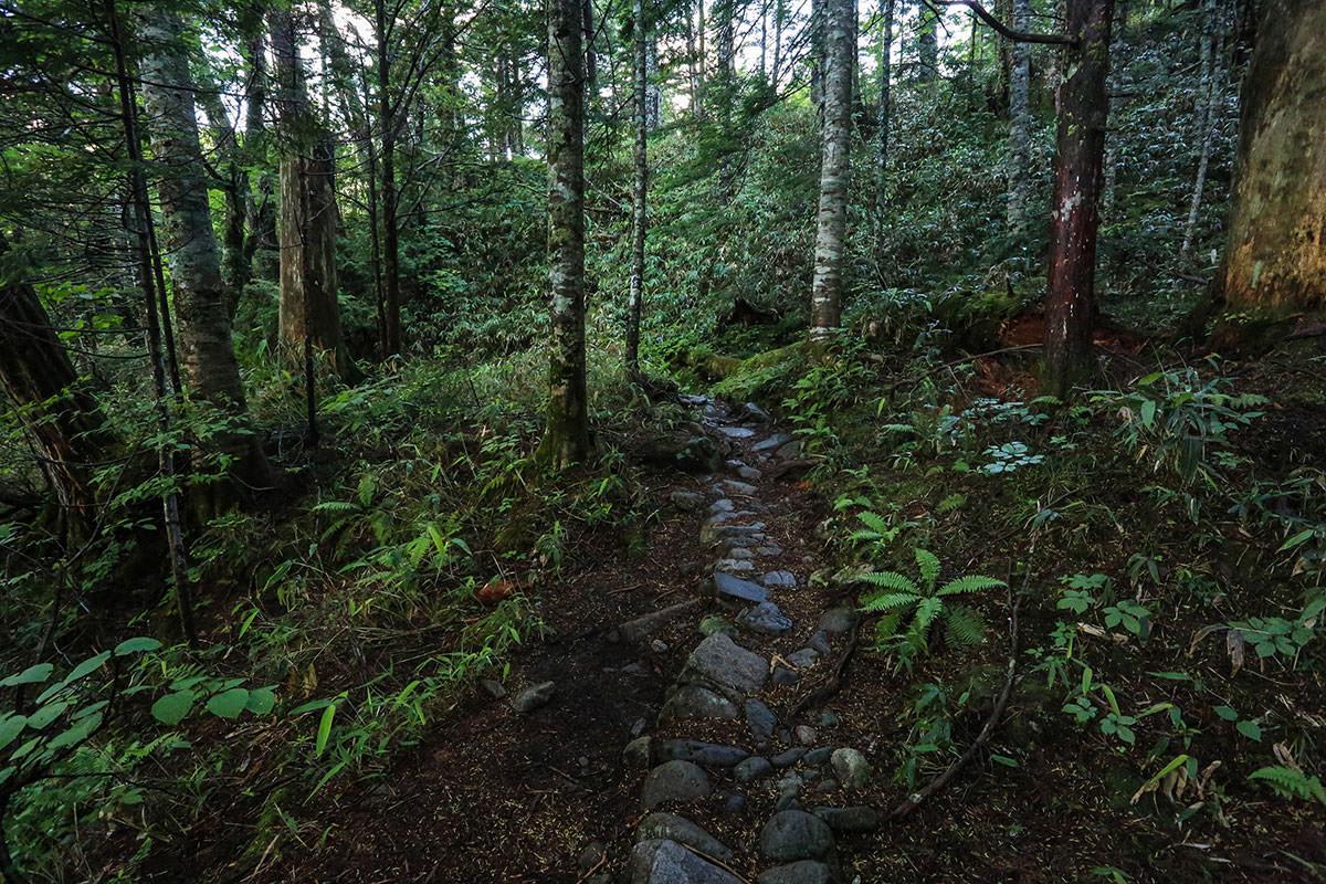 槍ヶ岳-白出沢を渡ると本格的な登山道に変わる