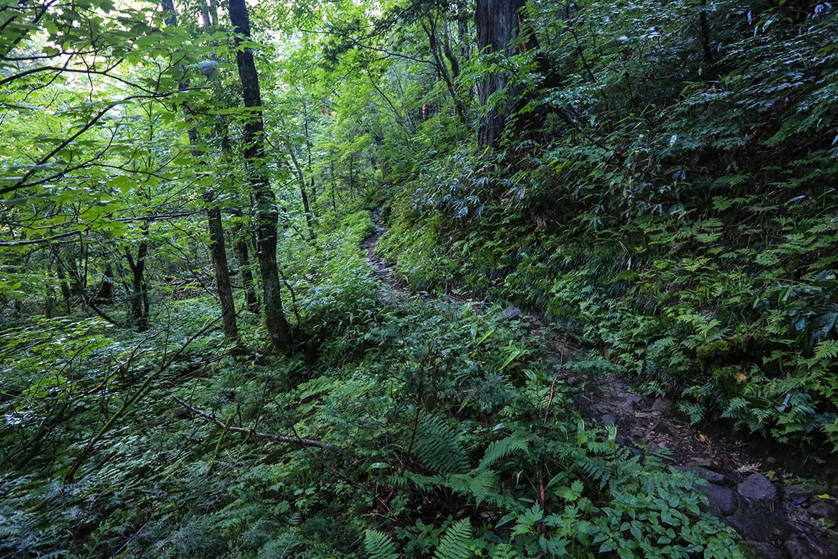 槍ヶ岳-湿度高め。登山道は湿ってる