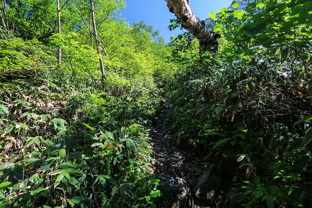 槍ヶ岳-歩き続けて樹林帯の中から空が見えるようになってきた