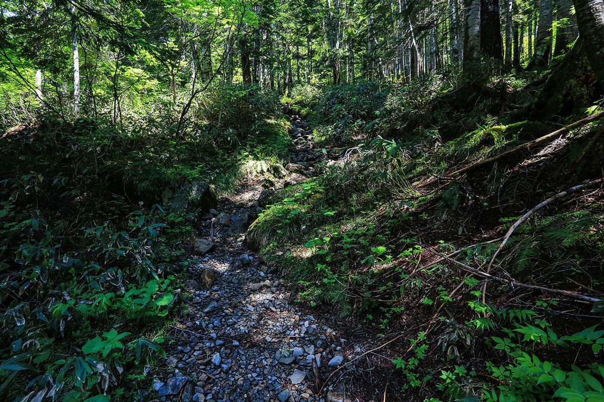 槍ヶ岳-槍平小屋から飛騨沢へ。樹林帯の中を登っていく。