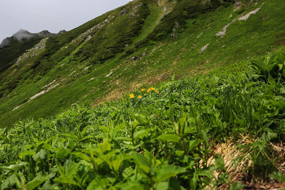 槍ヶ岳-飛騨沢には花が咲いている