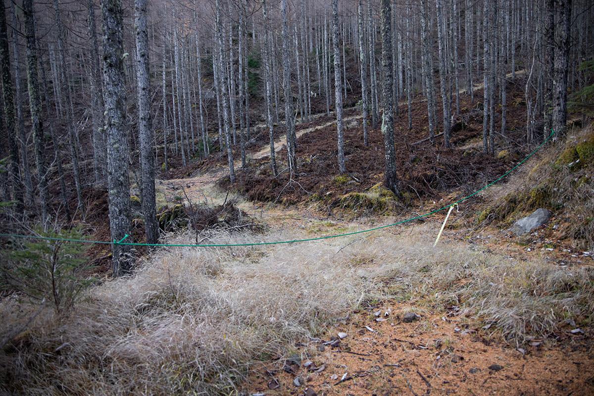 まわりには林道らしい道がいっぱいある