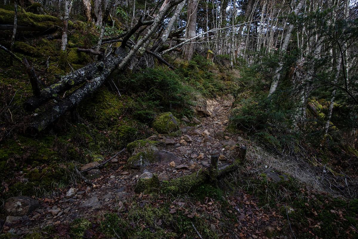 登山道らしく狭く石が多い