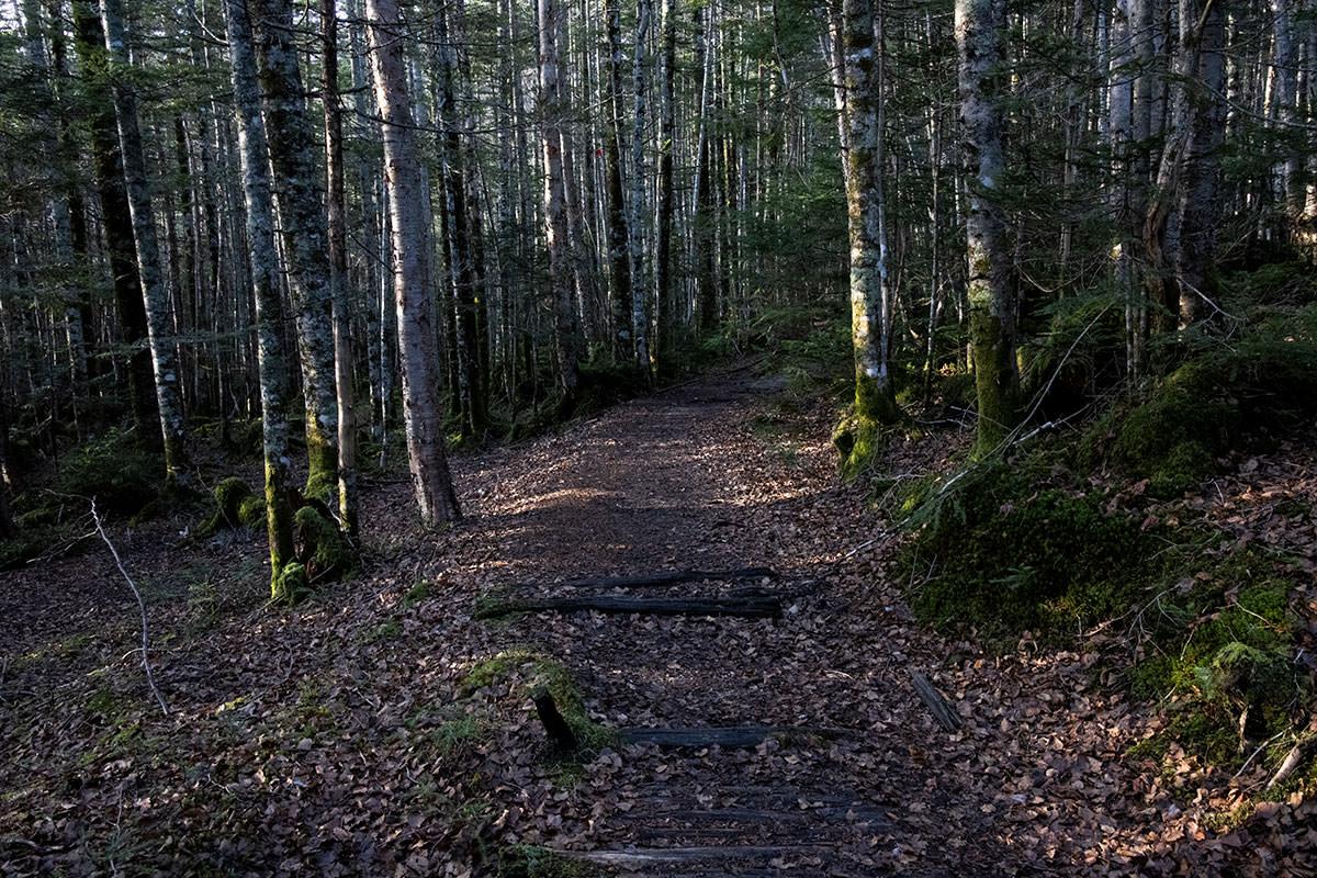 みどり池からは本沢温泉へ向かって平坦な登山道