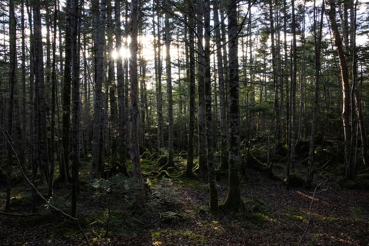 左の森から朝陽が射してきた