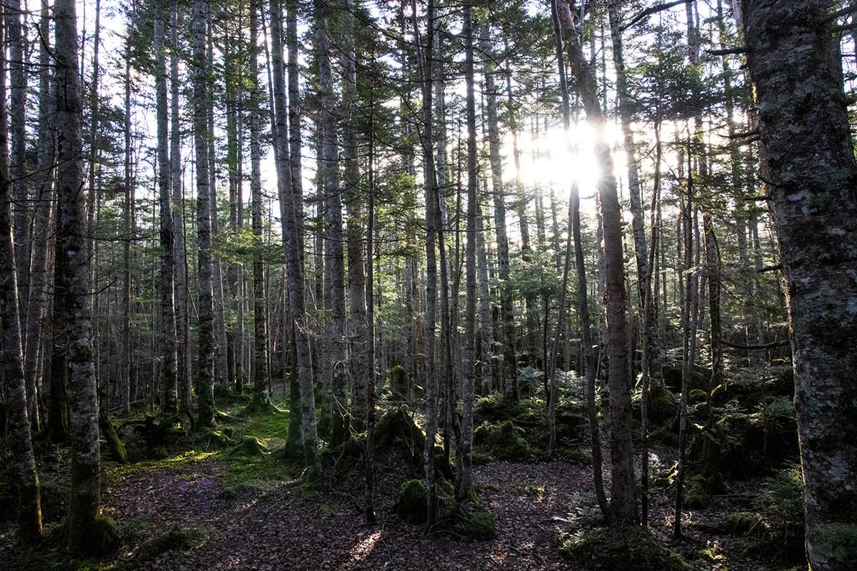 薄暗くて鬱蒼とした森が明るくなっていく