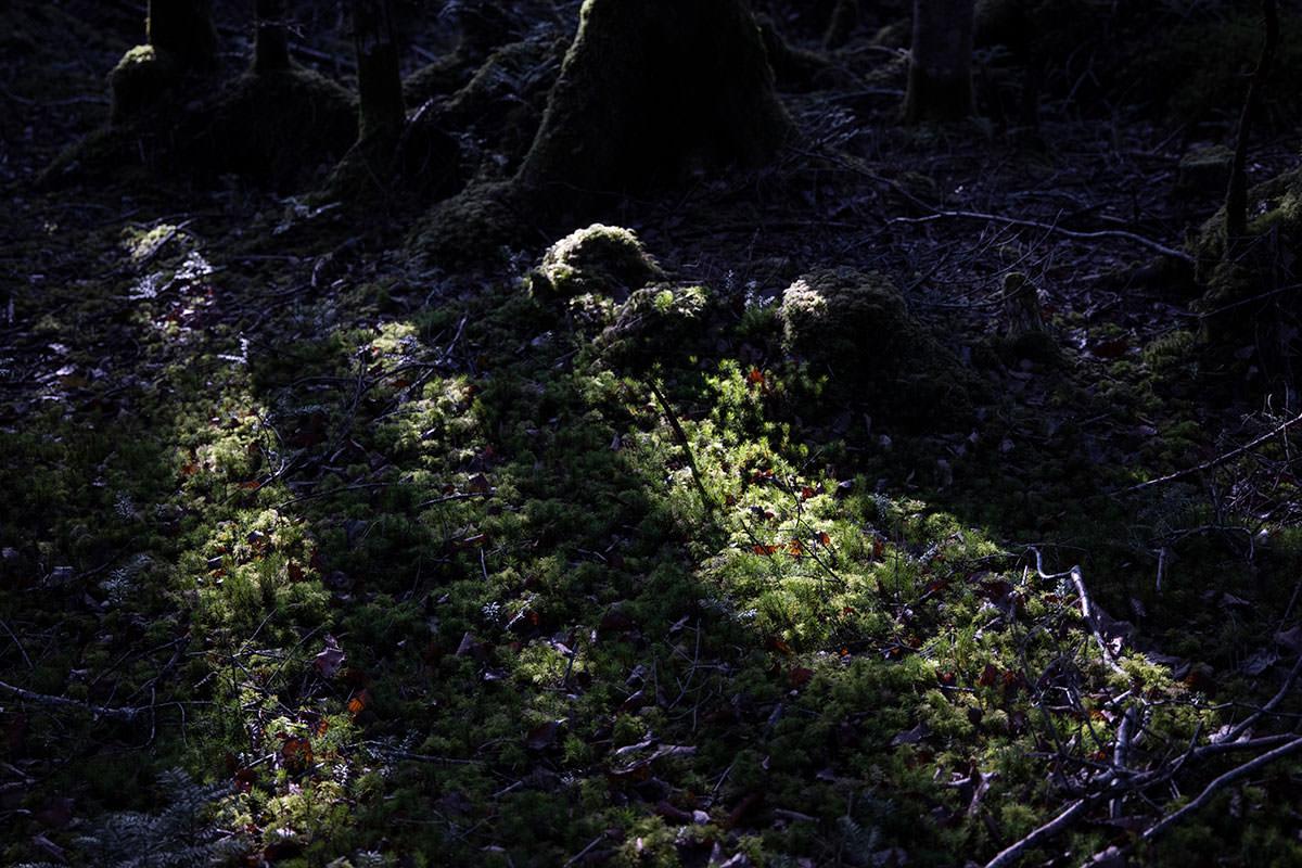 苔を見るたびに足が止まる