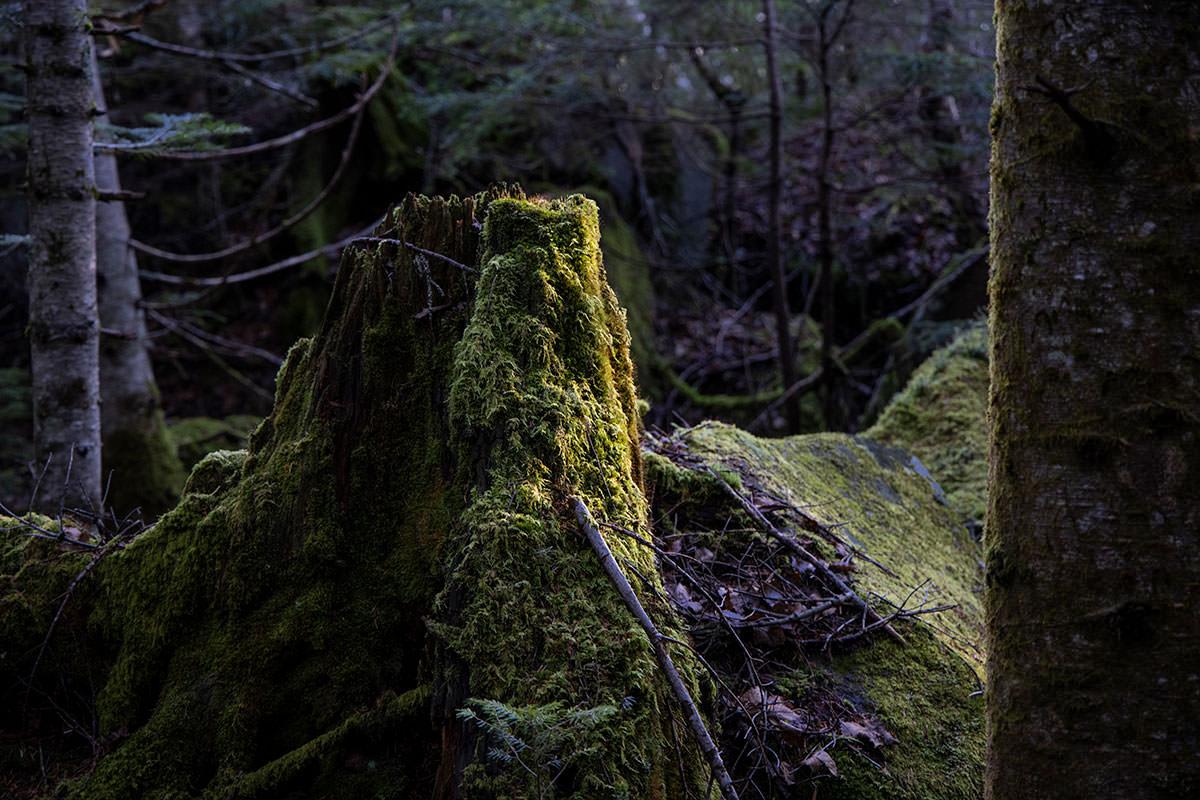 ここでも苔が印象的で見てばかり