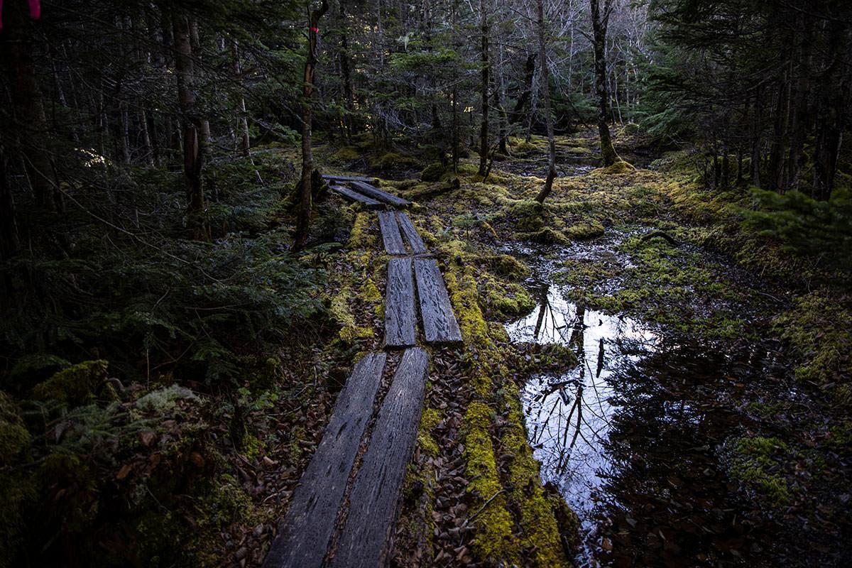 小川はこの湿地から流れてきていた