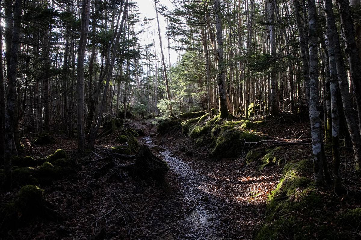 少し登ってまた平坦な登山道