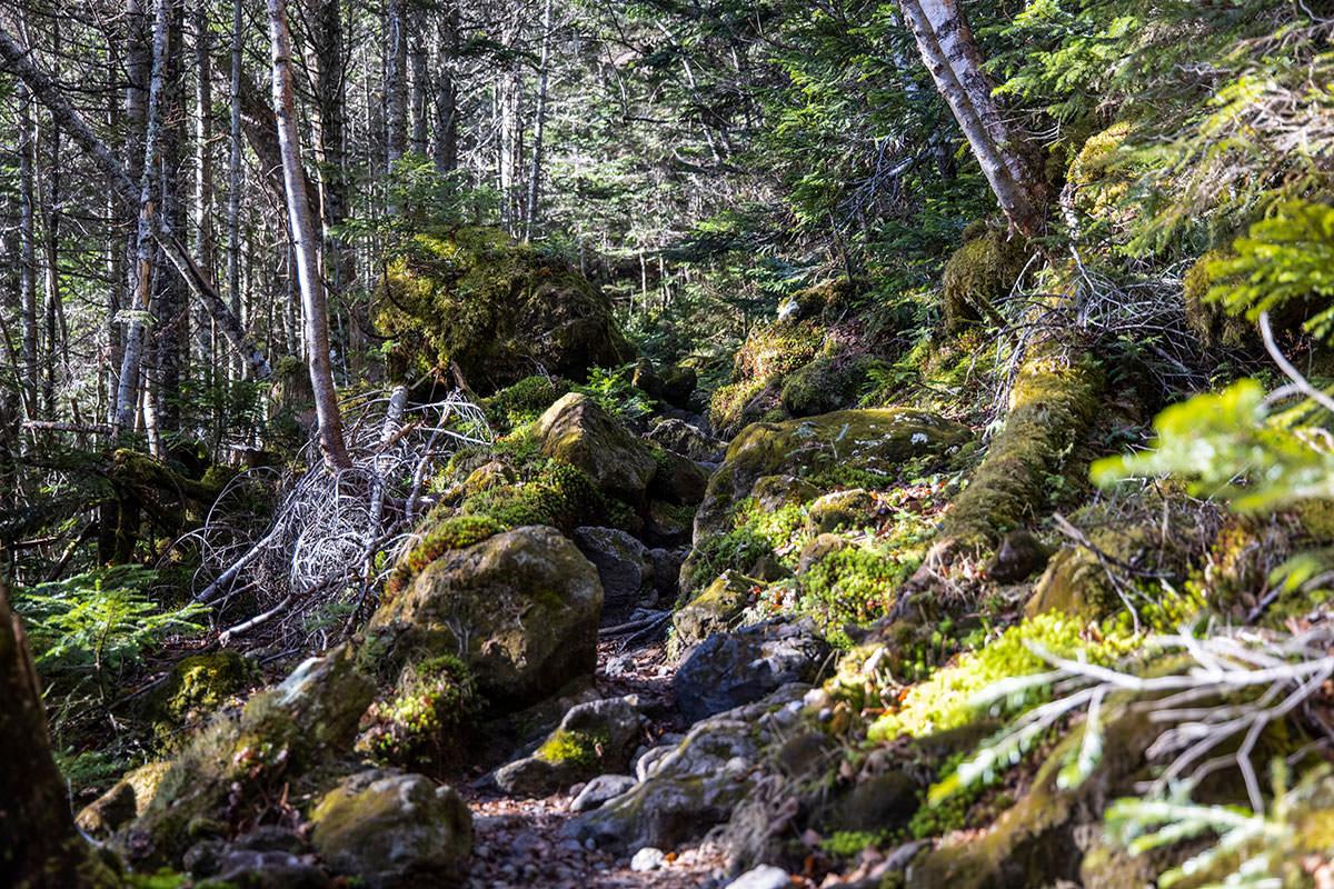 場所によって苔の生えた大きな石もあった