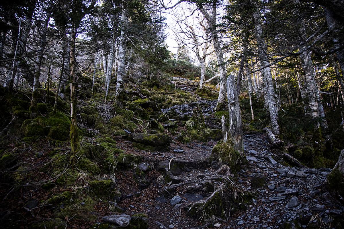 もうじき樹林帯から森林限界へ