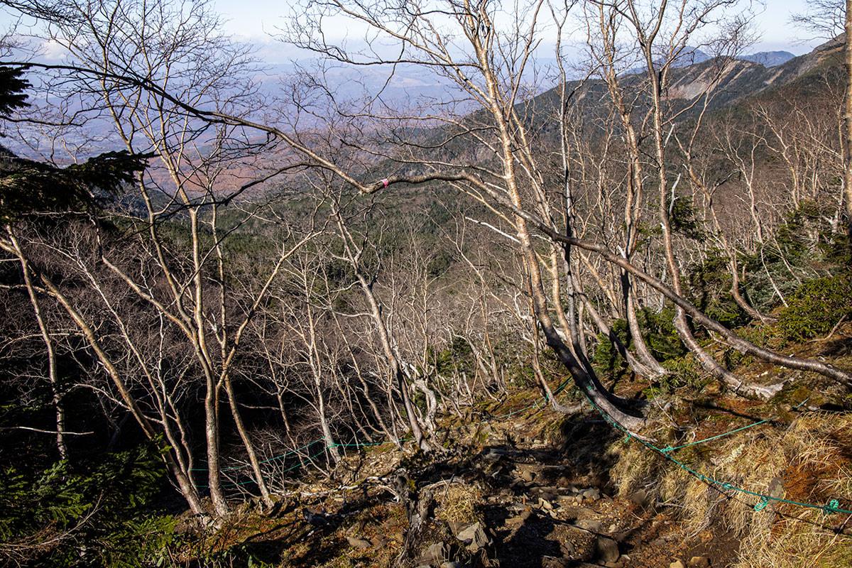 樹林帯の上部は葉っぱが散っている