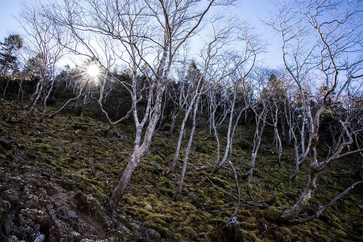 登山道の周りは苔と白樺