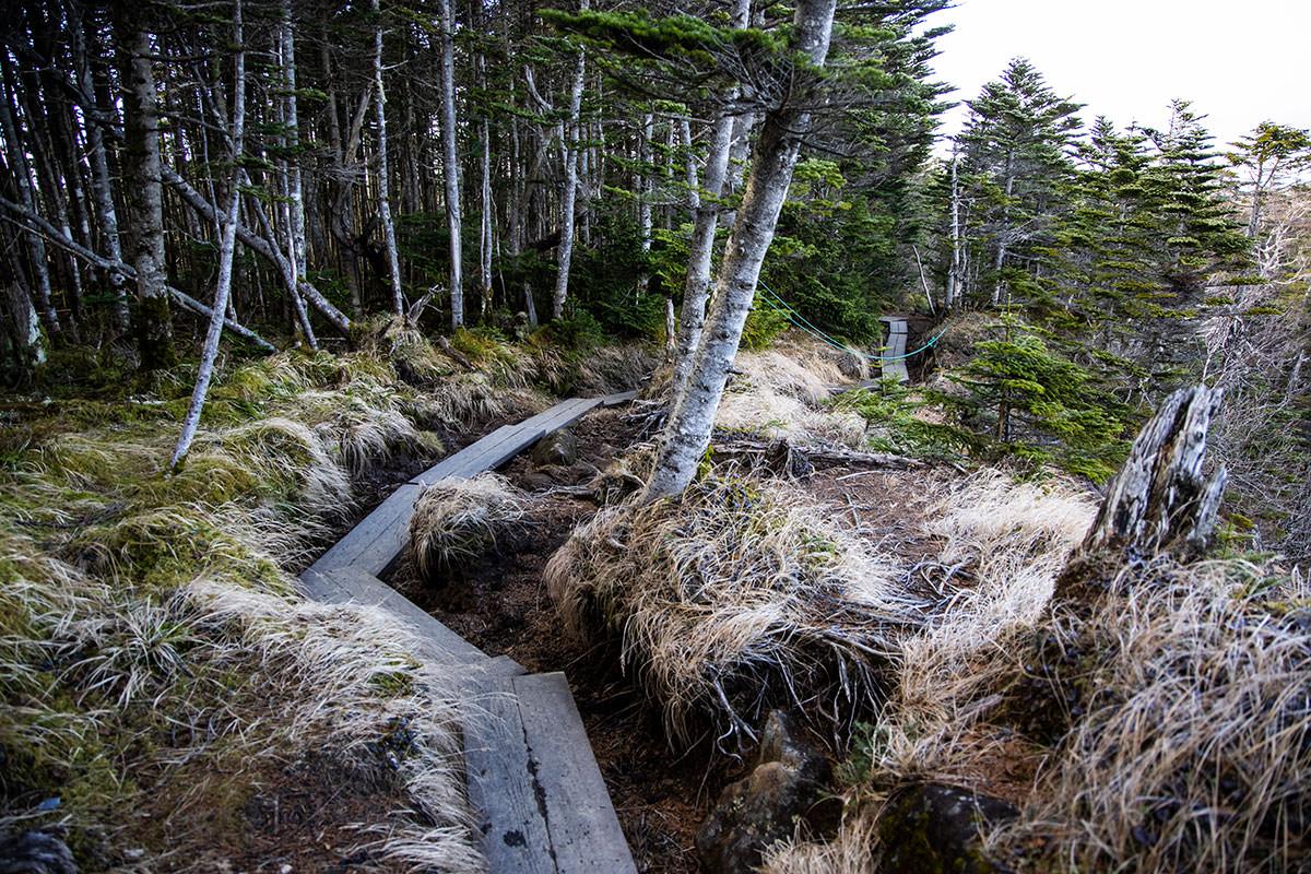 樹林帯の中は湿ってて木道があった