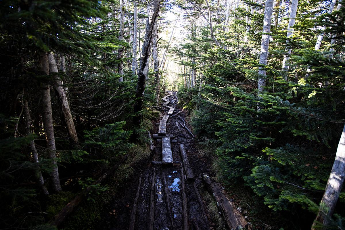 北八ヶ岳らしい湿気のある登山道と木道