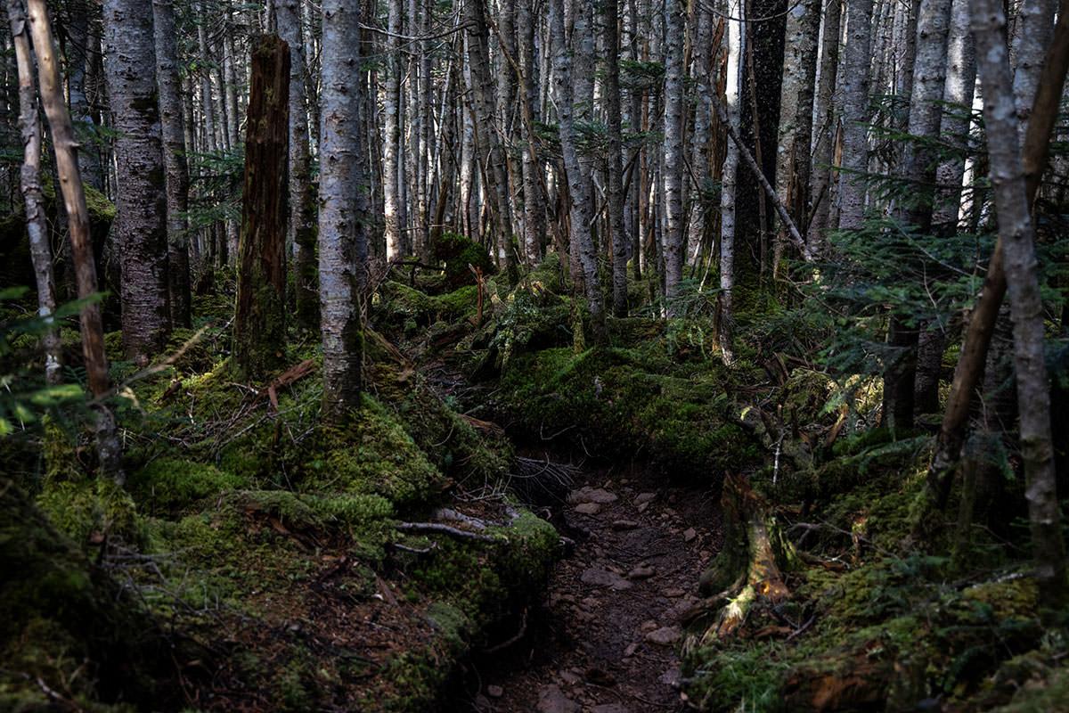登山道の周りには苔がいっぱい