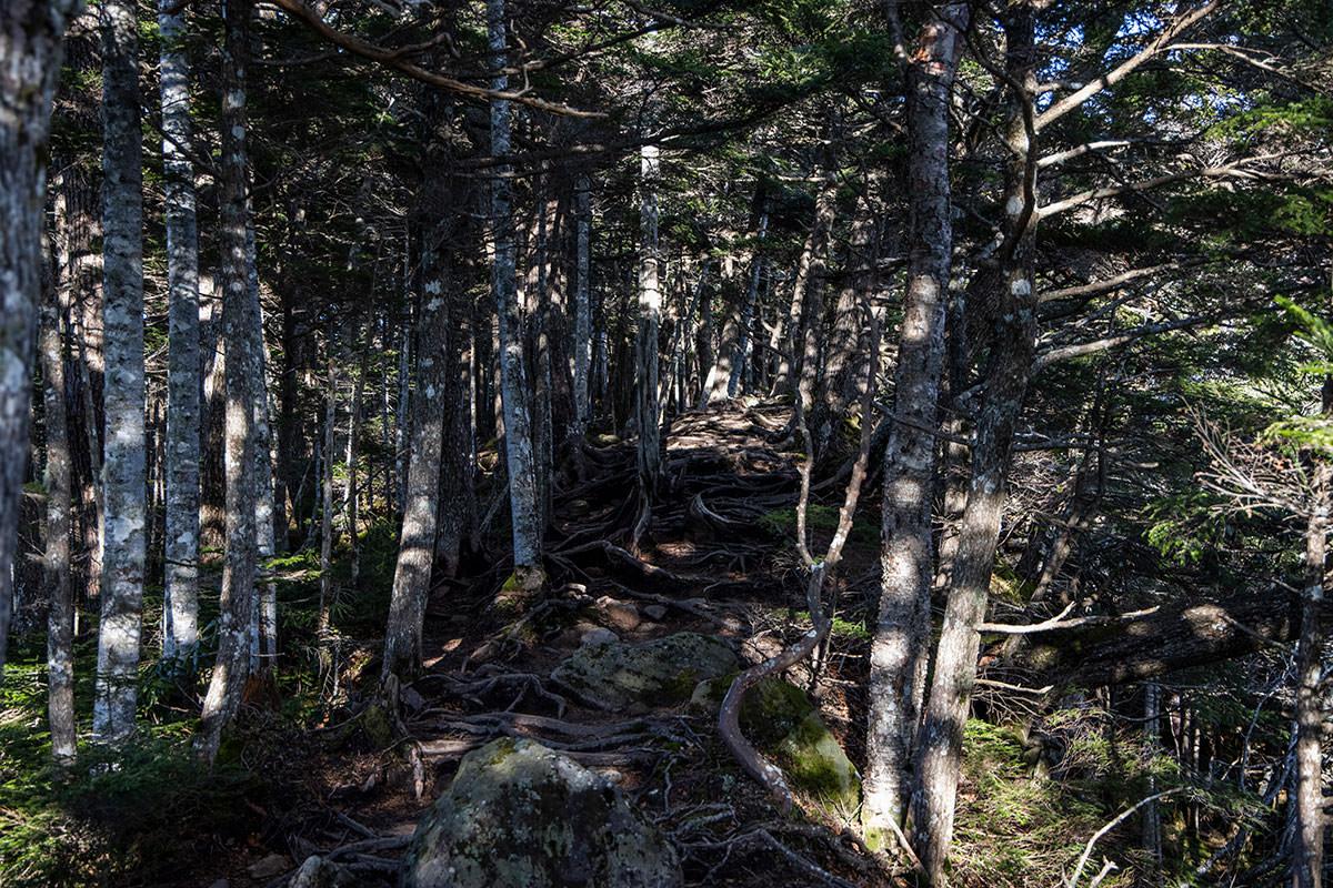 木の根もいっぱい