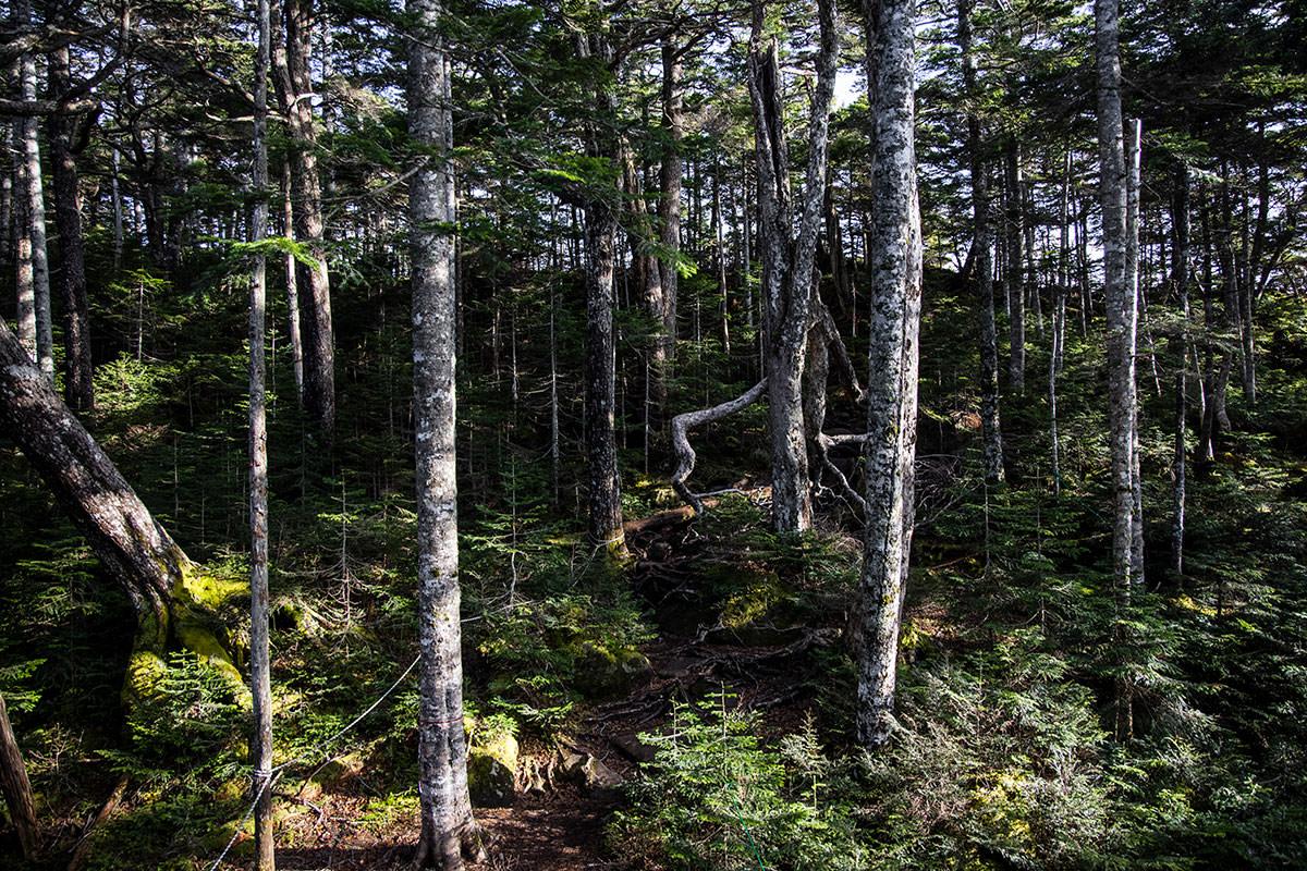 森の中を右へ左へと登山道が続いていく