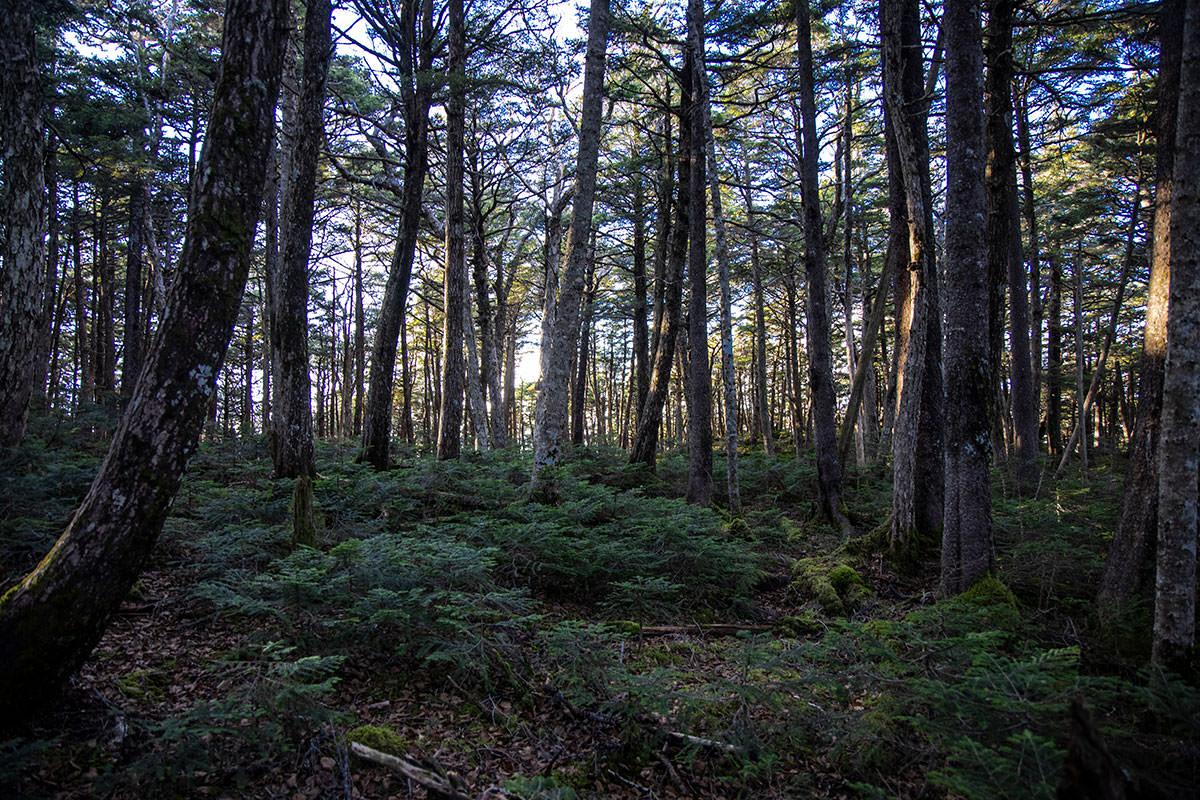 背の高い木の下には、背の低い木がたくさん