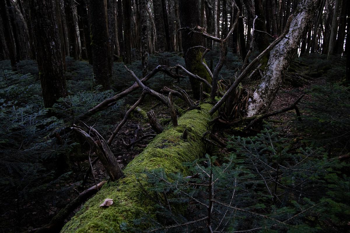 倒木は緑にいっぱいになるくらい苔が生してる