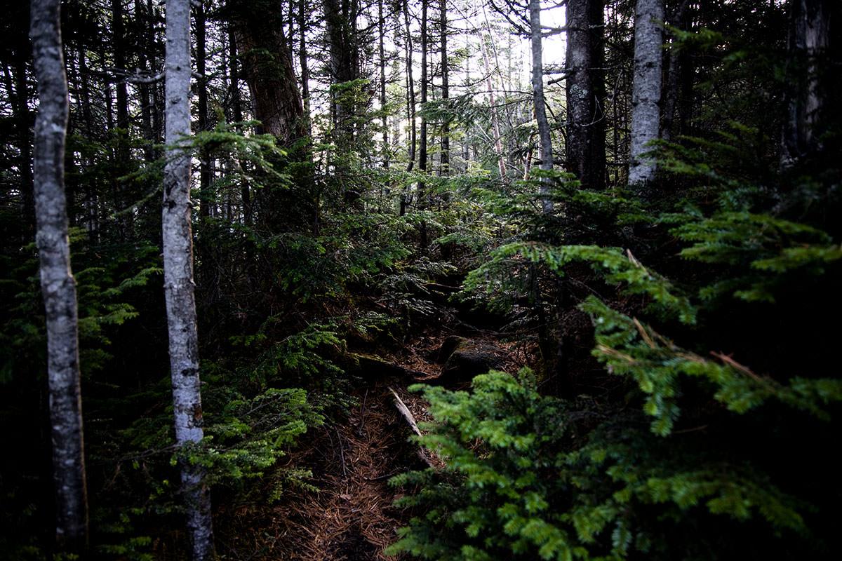 狭い登山道に枝葉が張り出している