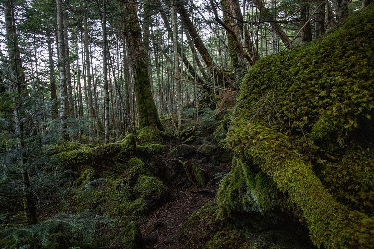 緑の中を下りながら、ときどき登り返す