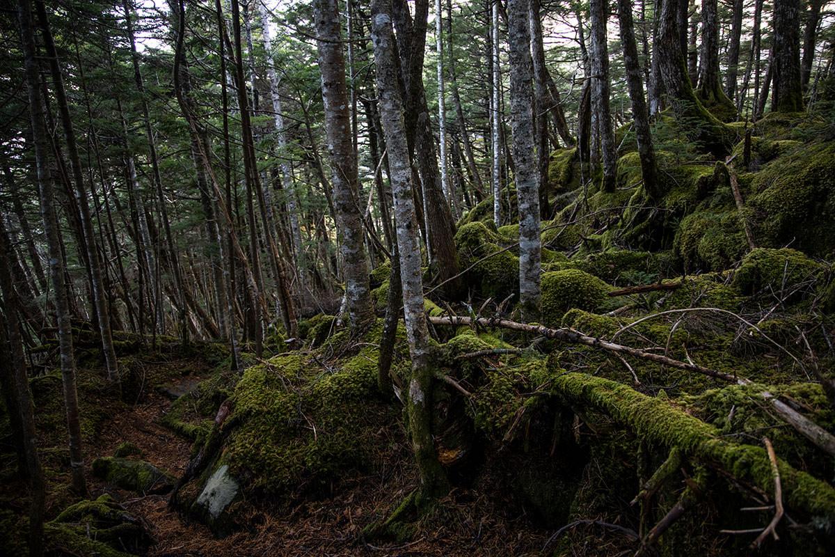 登山道は落ち葉で赤くて森は苔で緑