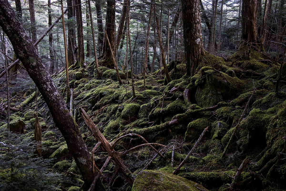 でこぼこした様子も苔が生していると印象的