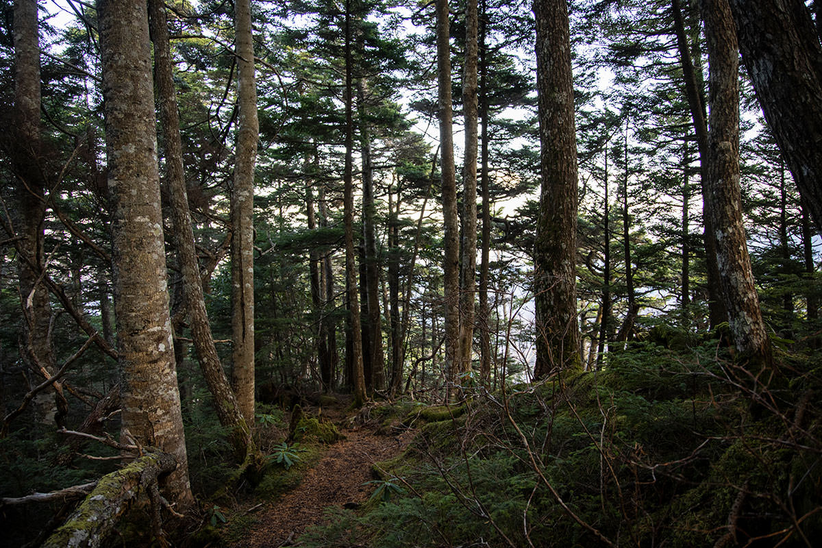 ようやく尾根らしい地形の登山道