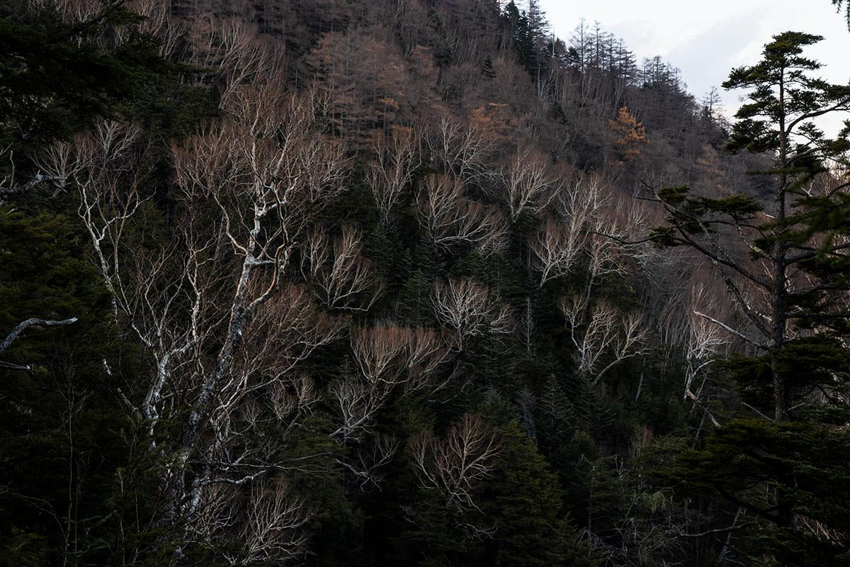 谷を挟んで左の尾根には白樺