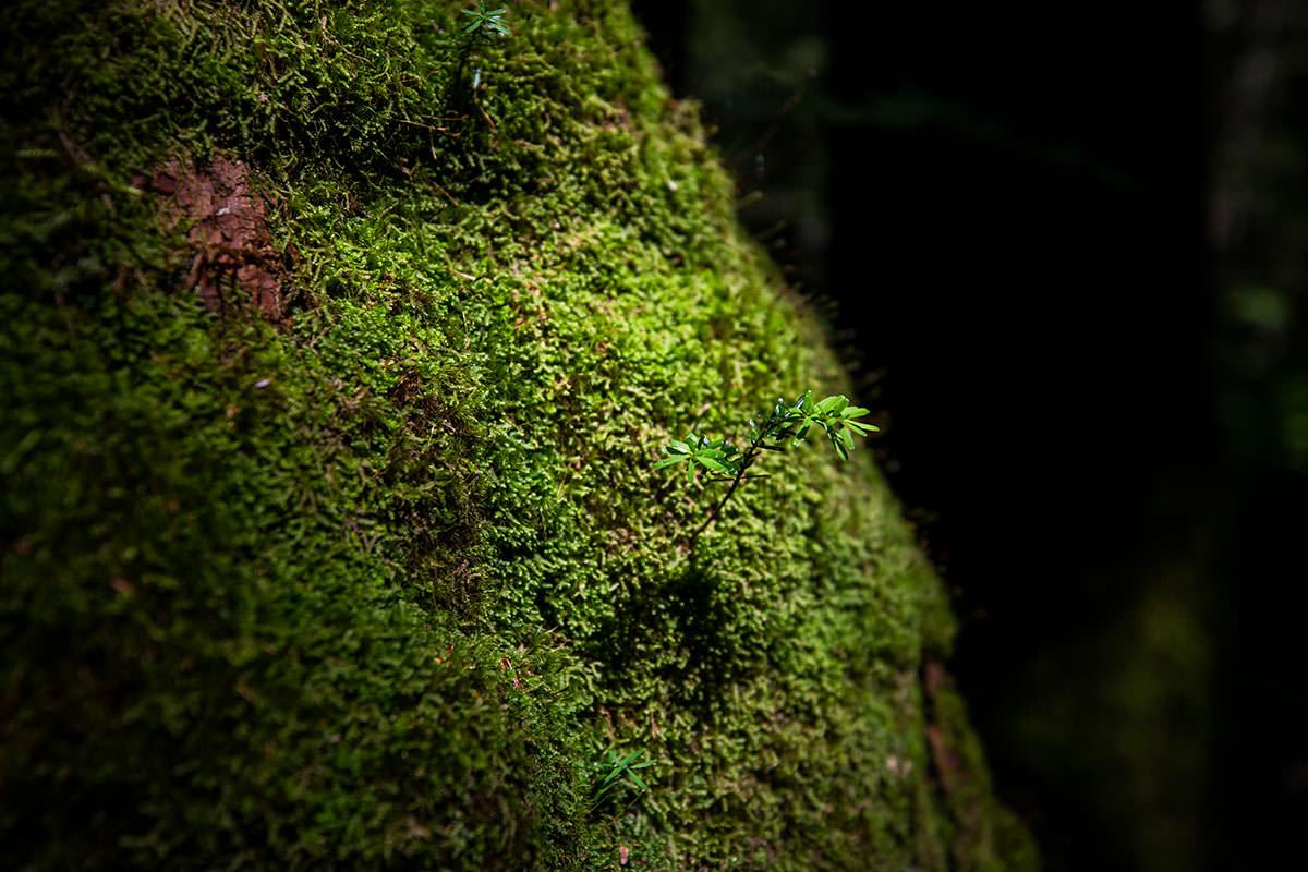 湿度が高くて苔がいっぱい
