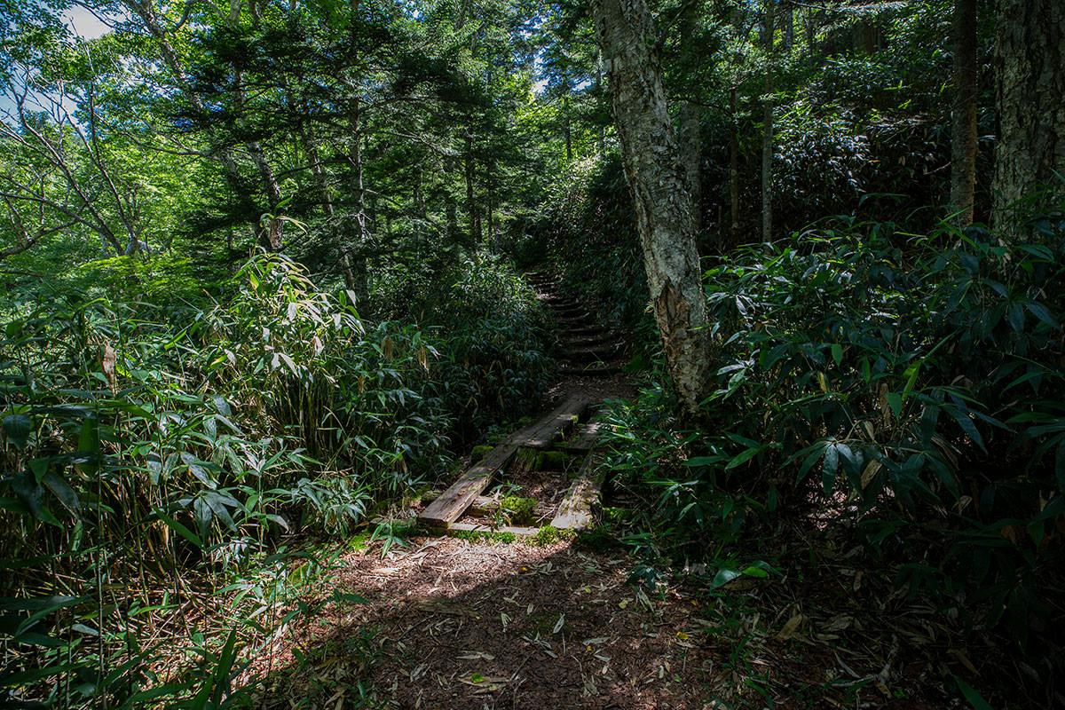 登山道に入ると階段が始まる