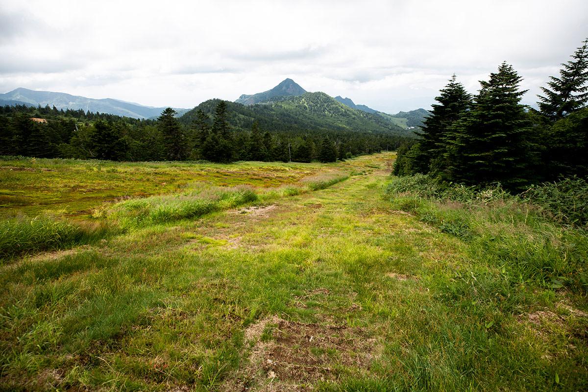 草が刈られていて歩きやすい